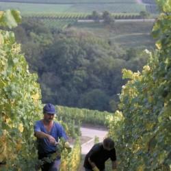 RK_viticulture