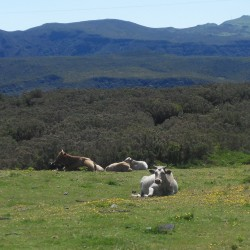 Mountain plateau - Paul da Serra