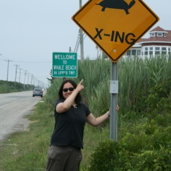 viv, whale beach/turtle crossing in sea isle