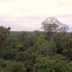 High up in the Amazon