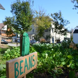 Veggie garden in Newport
