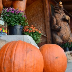 Pumpkins at Jay Peak