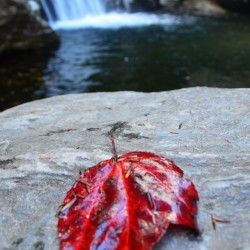 Maple leaf at Bingham Falls in Stowe