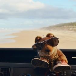 Cool Dingo tour, Fraser Island